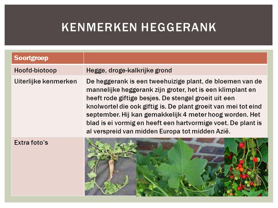 Soortgroep Hoofd-biotoopHegge, droge-kalkrijke grond Uiterlijke kenmerkenDe heggerank is een tweehuizige plant, de bloemen van de mannelijke heggerank