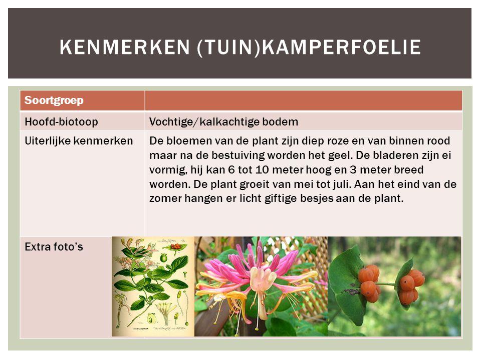 Soortgroep Hoofd-biotoopVochtige/kalkachtige bodem Uiterlijke kenmerkenDe bloemen van de plant zijn diep roze en van binnen rood maar na de bestuiving