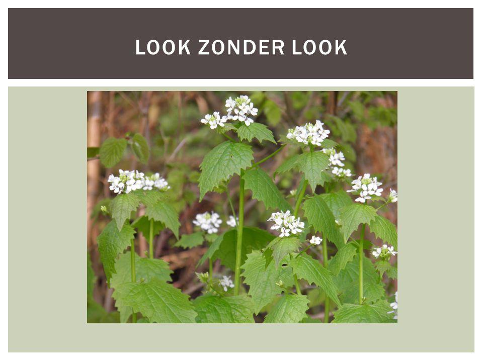 LOOK ZONDER LOOK