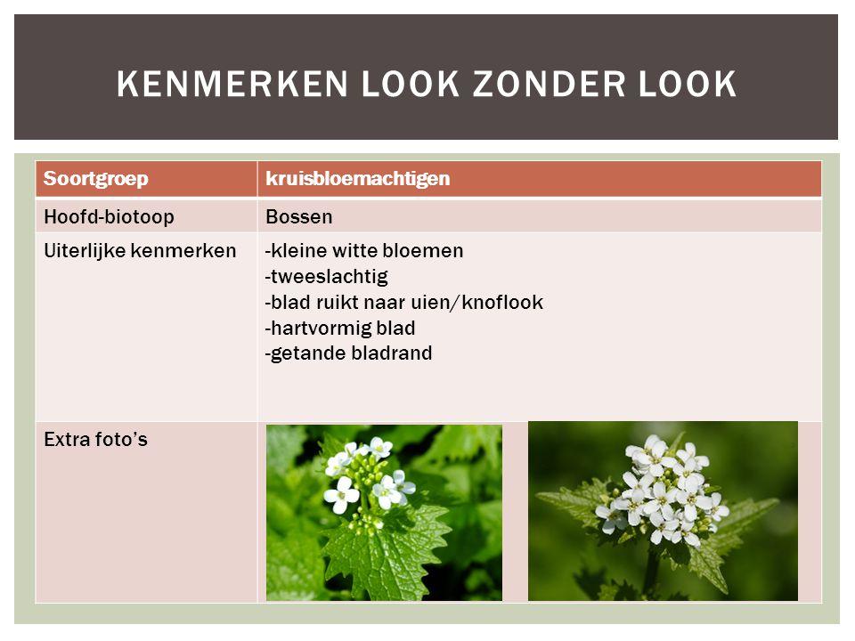 Soortgroepkruisbloemachtigen Hoofd-biotoopBossen Uiterlijke kenmerken-kleine witte bloemen -tweeslachtig -blad ruikt naar uien/knoflook -hartvormig bl