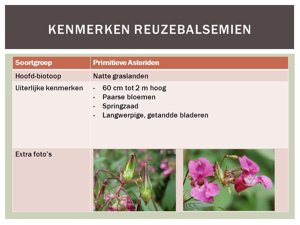 SoortgroepPrimitieve Asteriden Hoofd-biotoopNatte graslanden Uiterlijke kenmerken-60 cm tot 2 m hoog -Paarse bloemen -Springzaad -Langwerpige, getandd