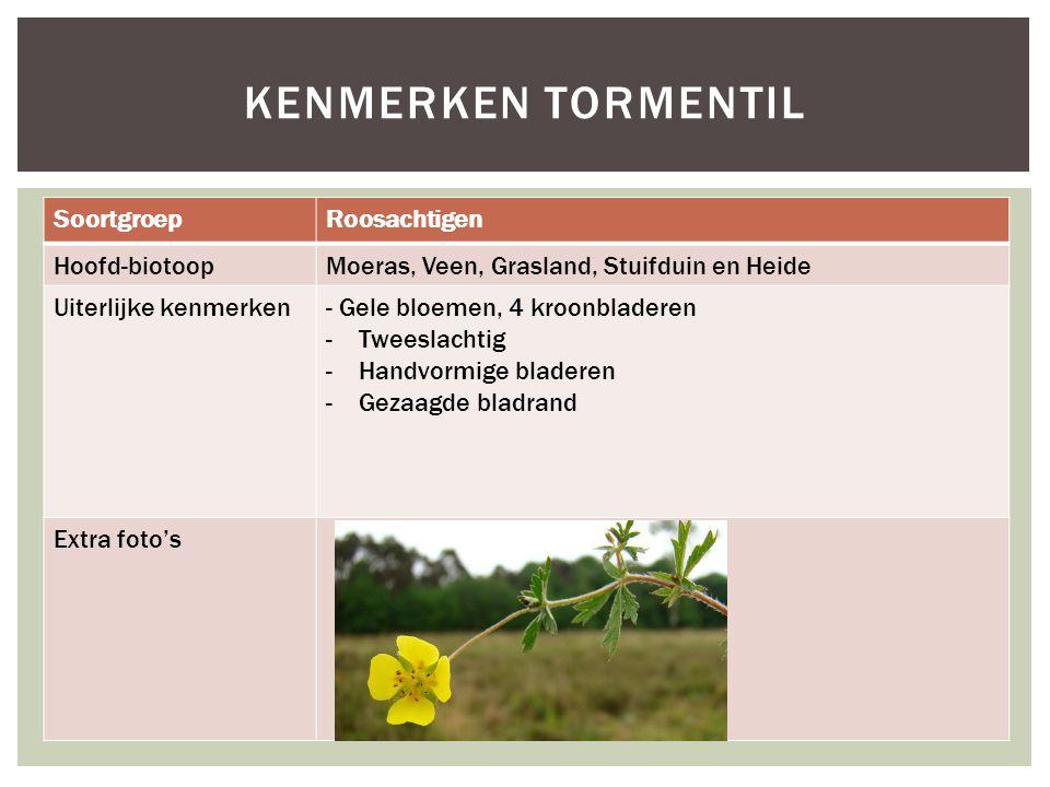 SoortgroepRoosachtigen Hoofd-biotoopMoeras, Veen, Grasland, Stuifduin en Heide Uiterlijke kenmerken- Gele bloemen, 4 kroonbladeren -Tweeslachtig -Hand