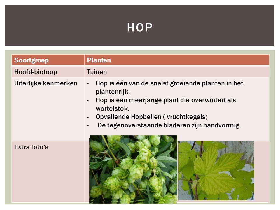 SoortgroepPlanten Hoofd-biotoopTuinen Uiterlijke kenmerken-Hop is één van de snelst groeiende planten in het plantenrijk. -Hop is een meerjarige plant