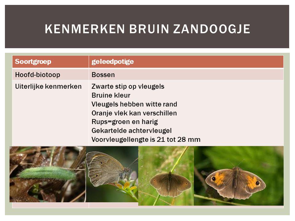Soortgroepgeleedpotige Hoofd-biotoopBossen Uiterlijke kenmerkenZwarte stip op vleugels Bruine kleur Vleugels hebben witte rand Oranje vlek kan verschi