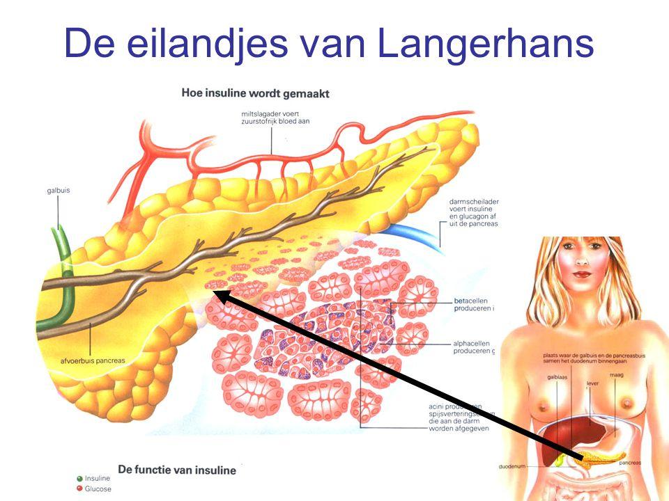 De eilandjes van Langerhans