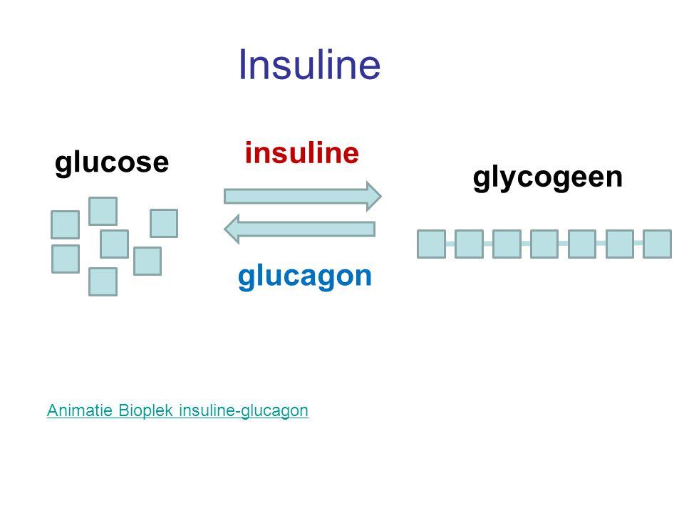 Insuline Animatie Bioplek insuline-glucagon glucose glycogeen insuline glucagon