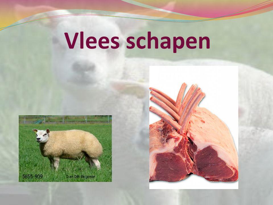 Vlees schapen