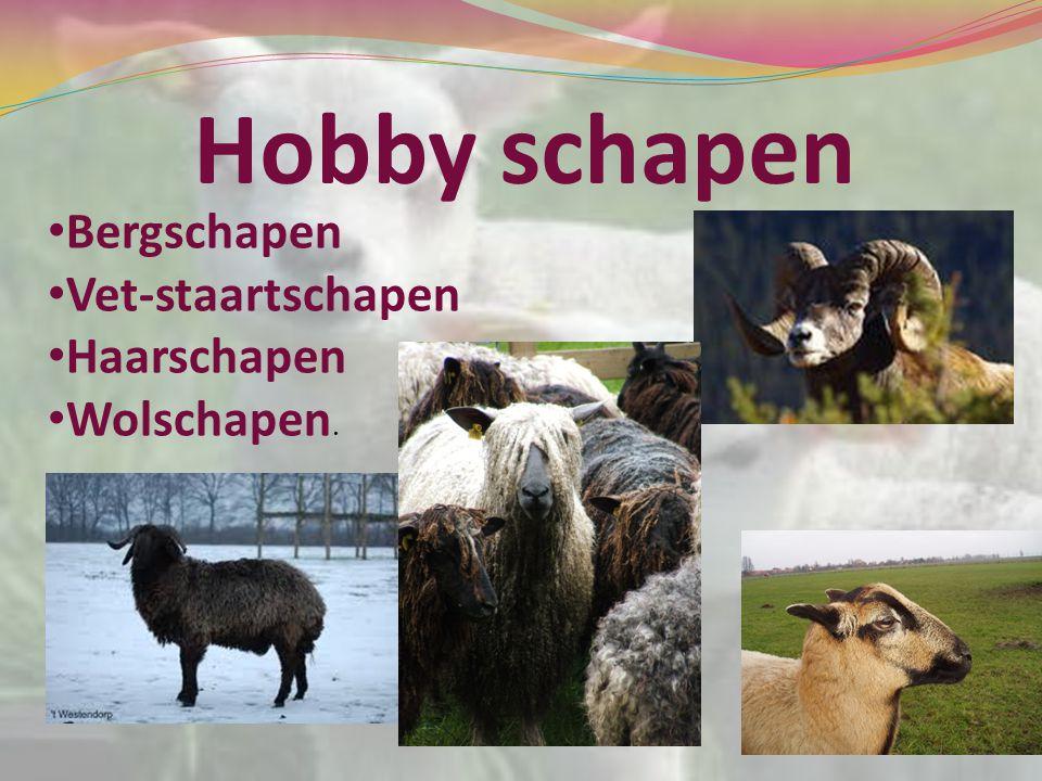 Hobby schapen Bergschapen Vet-staartschapen Haarschapen Wolschapen.