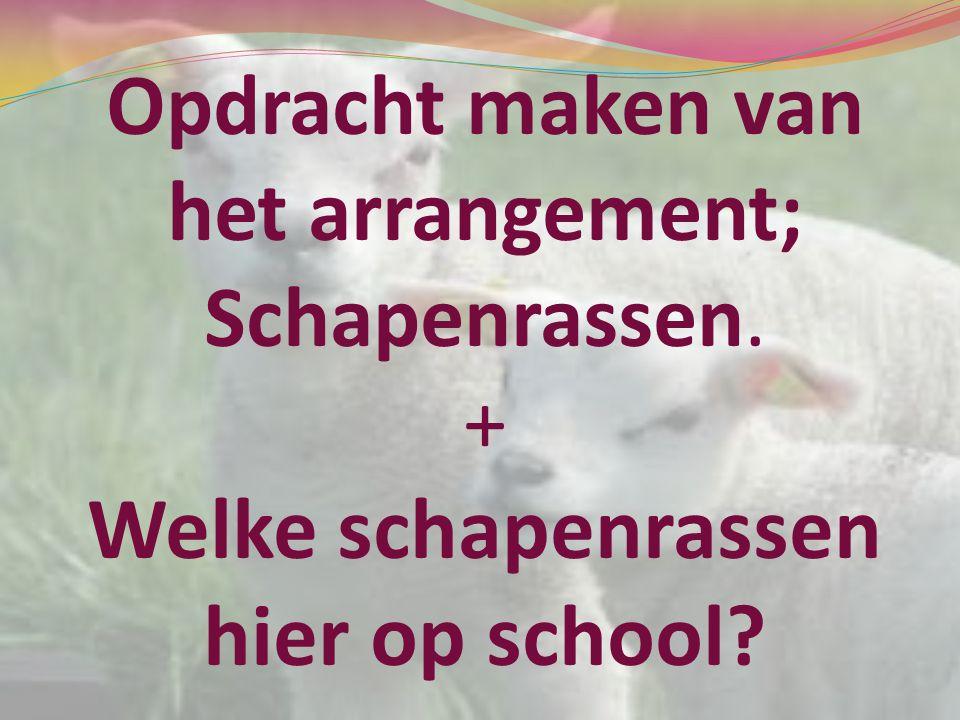 Opdracht maken van het arrangement; Schapenrassen. + Welke schapenrassen hier op school?