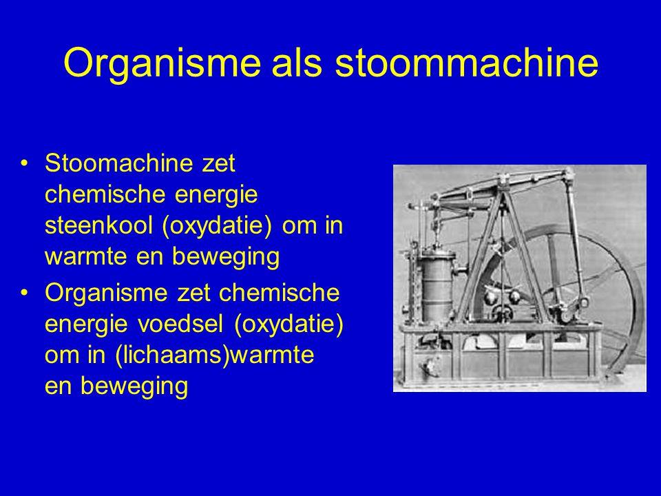Organisme als stoommachine Stoomachine zet chemische energie steenkool (oxydatie) om in warmte en beweging Organisme zet chemische energie voedsel (ox