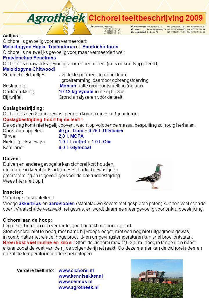 Cichorei teeltbeschrijving 2009 Aaltjes: Cichorei is gevoelig voor en vermeerdert: Meloidogyne Hapla, Trichodorus en Paratrichodorus Cichorei is nauwelijks gevoelig voor, maar vermeerdert wel: Pratylenchus Penetrans Cichorei is nauwelijks gevoelig voor, en reduceert: (mits onkruidvrij geteelt !) Meloidogyne Chitwoodi Schadebeeld aaltjes:- vertakte pennen, daardoor tarra - groeiremming, daardoor opbrengstderving Bestrijding: Monam natte grondontsmetting (najaar) Onderdrukking: 10-12 kg Vydate in de rij bij zaai Bij twijfel:Grond analyseren vóór de teelt .