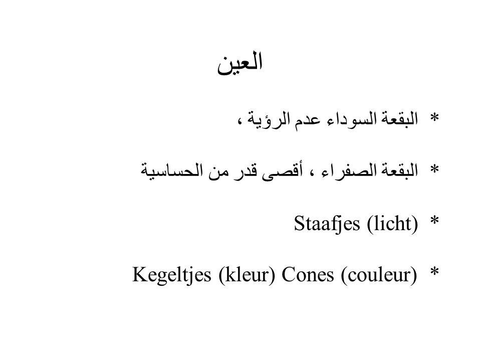 * البقعة السوداء عدم الرؤية ، * البقعة الصفراء ، أقصى قدر من الحساسية Staafjes (licht)* Kegeltjes (kleur) Cones (couleur)*