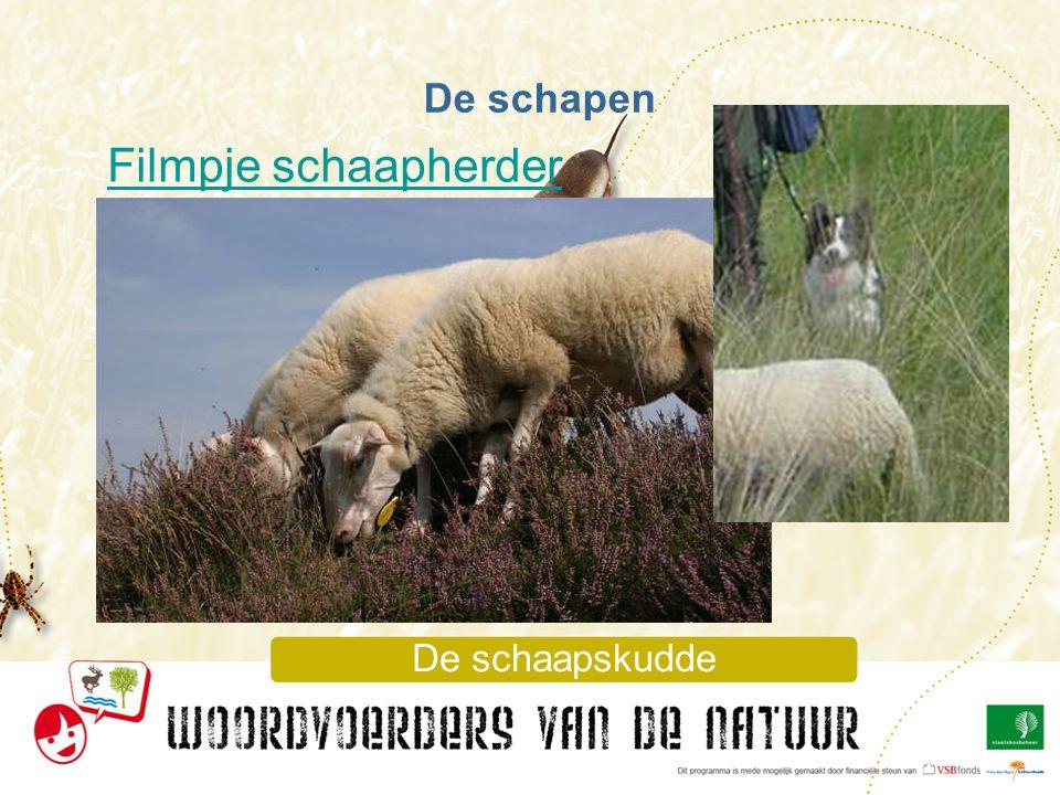 De schaapskudde De schapen Filmpje schaapherder