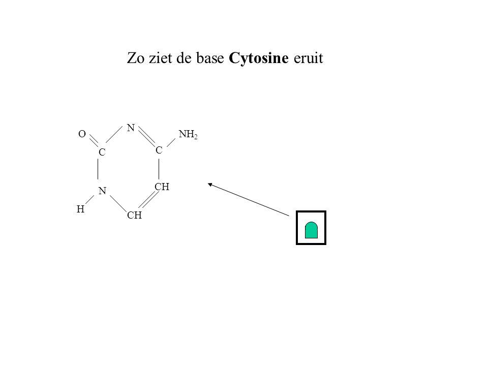 Zo ziet de base Cytosine eruit CH N C C N H ONH 2