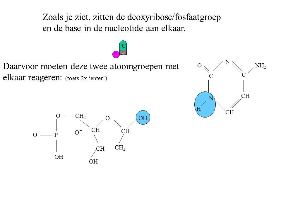 p Zoals je ziet, zitten de deoxyribose/fosfaatgroep en de base in de nucleotide aan elkaar. Daarvoor moeten deze twee atoomgroepen met elkaar reageren