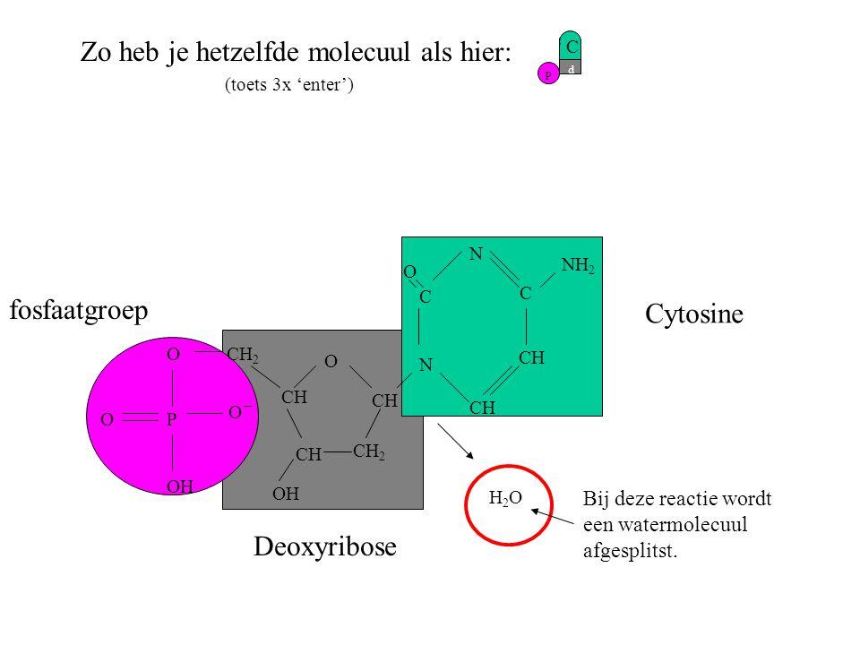p d C O CH CH 2 CH CH 2 Zo heb je hetzelfde molecuul als hier: (toets 3x 'enter') H2OH2O CH N C C N O NH 2 fosfaatgroep Deoxyribose Cytosine O PO O OH