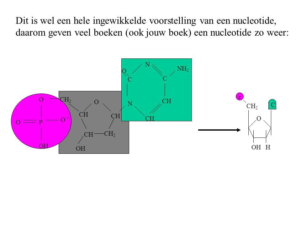 O H CH 2 p Dit is wel een hele ingewikkelde voorstelling van een nucleotide, daarom geven veel boeken (ook jouw boek) een nucleotide zo weer: C OH O C