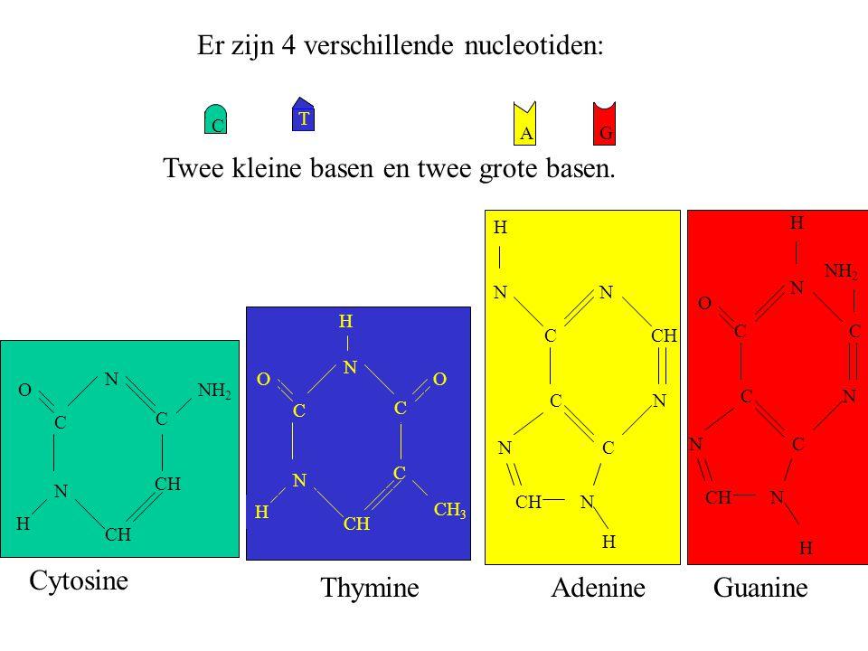 Er zijn 4 verschillende nucleotiden: Twee kleine basen en twee grote basen. AG T C CH N C C N H ONH 2 Cytosine CH C N C C N H OO H CH 3 Thymine N C N