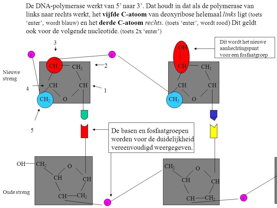 O CH CH 2 CH CH 2 OH O CH CH 2 CH CH 2 O CH CH 2 CH O CH 2 CH OH De DNA-polymerase werkt van 5' naar 3'. Dat houdt in dat als de polymerase van links