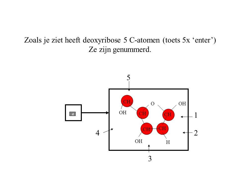 O CH 3 CH Zoals je ziet heeft deoxyribose 5 C-atomen (toets 5x 'enter') Ze zijn genummerd. 1 2 3 4 5 H OH d