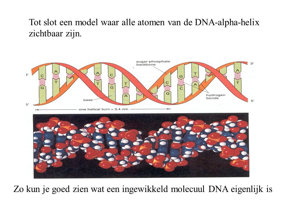 Zo kun je goed zien wat een ingewikkeld molecuul DNA eigenlijk is Tot slot een model waar alle atomen van de DNA-alpha-helix zichtbaar zijn.