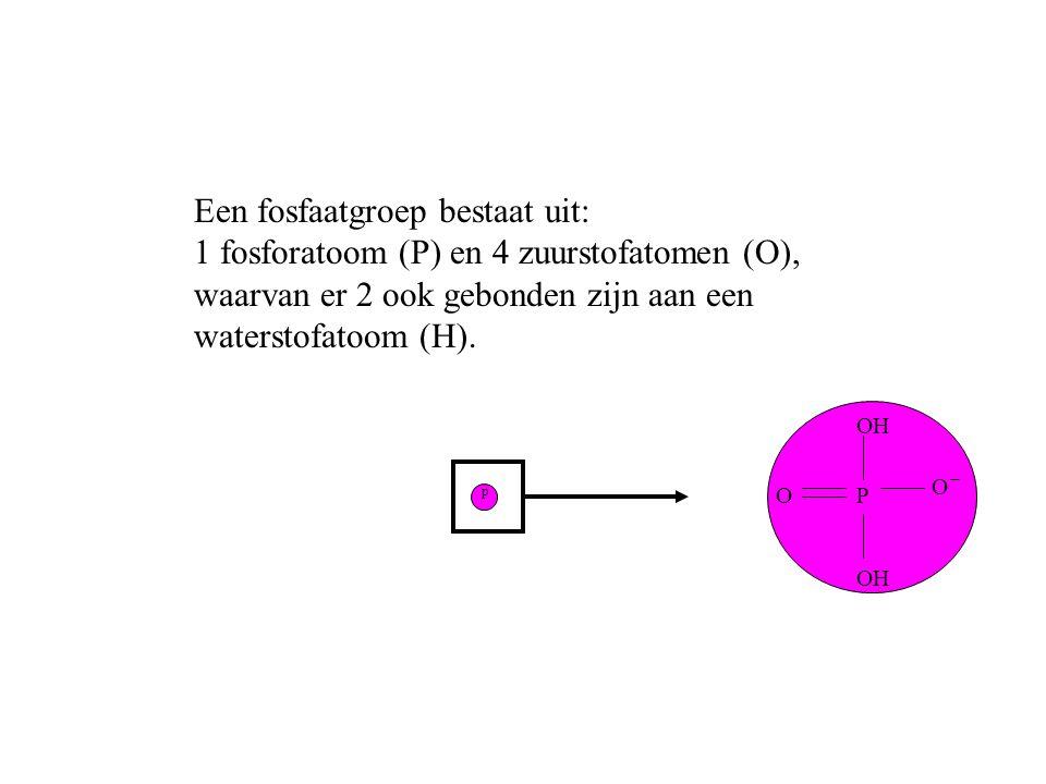 p PO O OH Een fosfaatgroep bestaat uit: 1 fosforatoom (P) en 4 zuurstofatomen (O), waarvan er 2 ook gebonden zijn aan een waterstofatoom (H). OH