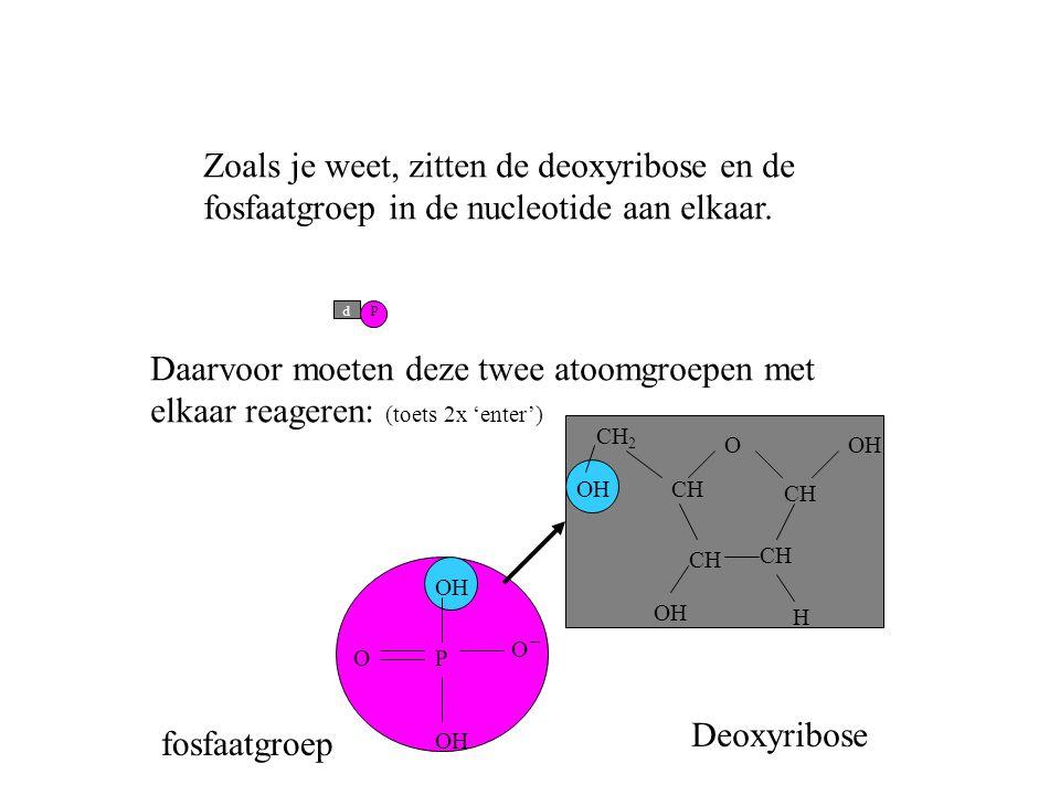p d Zoals je weet, zitten de deoxyribose en de fosfaatgroep in de nucleotide aan elkaar. O CH H OH PO O Daarvoor moeten deze twee atoomgroepen met elk