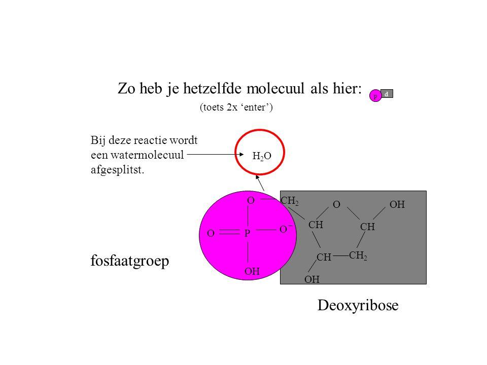O CH CH 2 CH OH O PO O fosfaatgroep Deoxyribose H2OH2O Zo heb je hetzelfde molecuul als hier: (toets 2x 'enter') p d CH 2 OH Bij deze reactie wordt ee