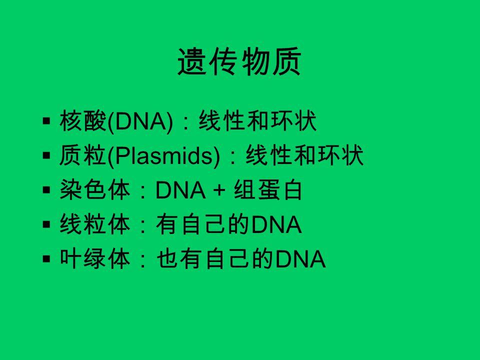 遗传物质  核酸 (DNA) :线性和环状  质粒 (Plasmids) :线性和环状  染色体: DNA + 组蛋白  线粒体:有自己的 DNA  叶绿体:也有自己的 DNA