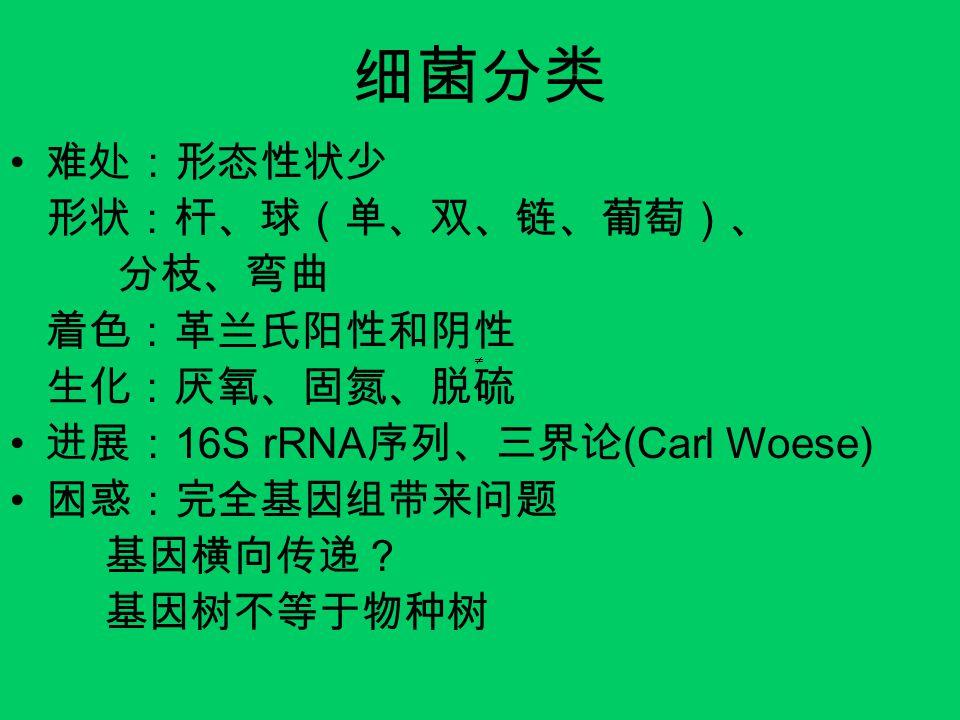细菌分类 难处:形态性状少 形状:杆、球(单、双、链、葡萄)、 分枝、弯曲 着色:革兰氏阳性和阴性 生化:厌氧、固氮、脱硫 进展: 16S rRNA 序列、三界论 (Carl Woese) 困惑:完全基因组带来问题 基因横向传递? 基因树不等于物种树