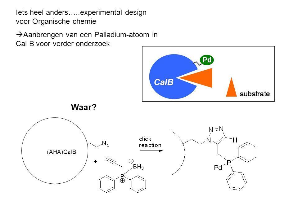Iets heel anders…..experimental design voor Organische chemie  Aanbrengen van een Palladium-atoom in Cal B voor verder onderzoek (AHA)CalB Waar?