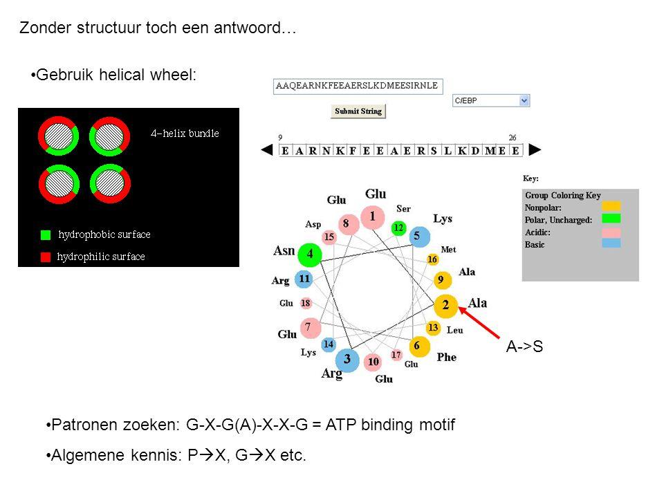 Zonder structuur toch een antwoord… Gebruik helical wheel: A->S Patronen zoeken: G-X-G(A)-X-X-G = ATP binding motif Algemene kennis: P  X, G  X etc.