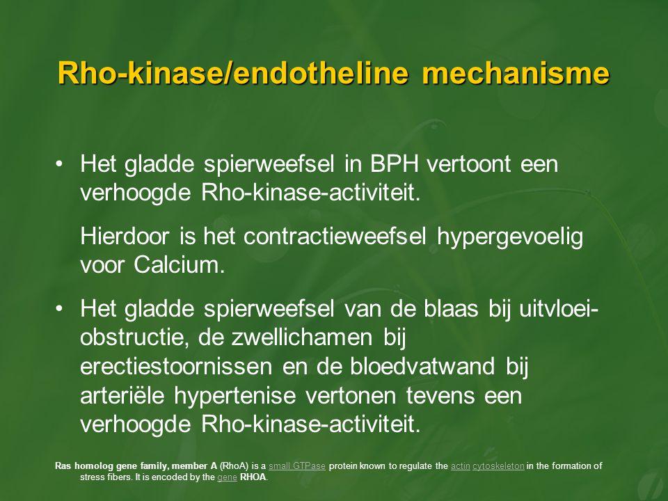 Rho-kinase/endotheline mechanisme Het gladde spierweefsel in BPH vertoont een verhoogde Rho-kinase-activiteit. Hierdoor is het contractieweefsel hyper
