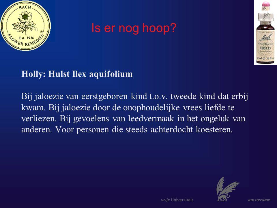 Is er nog hoop. Holly: Hulst Ilex aquifolium Bij jaloezie van eerstgeboren kind t.o.v.