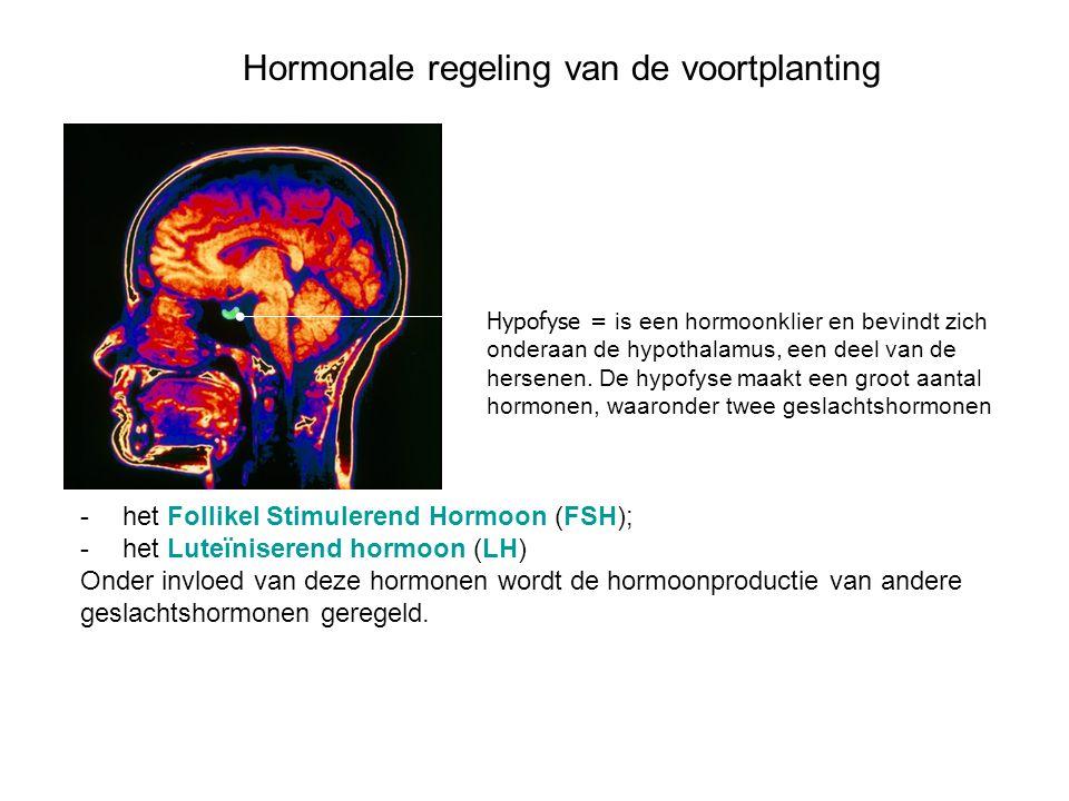 Hormonale regeling van de voortplanting Hypofyse = is een hormoonklier en bevindt zich onderaan de hypothalamus, een deel van de hersenen. De hypofyse