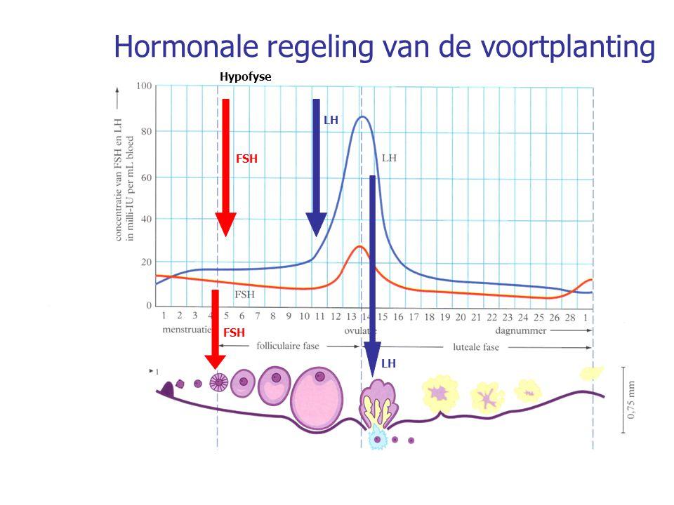 Hormonale regeling van de voortplanting Hypofyse FSH LH