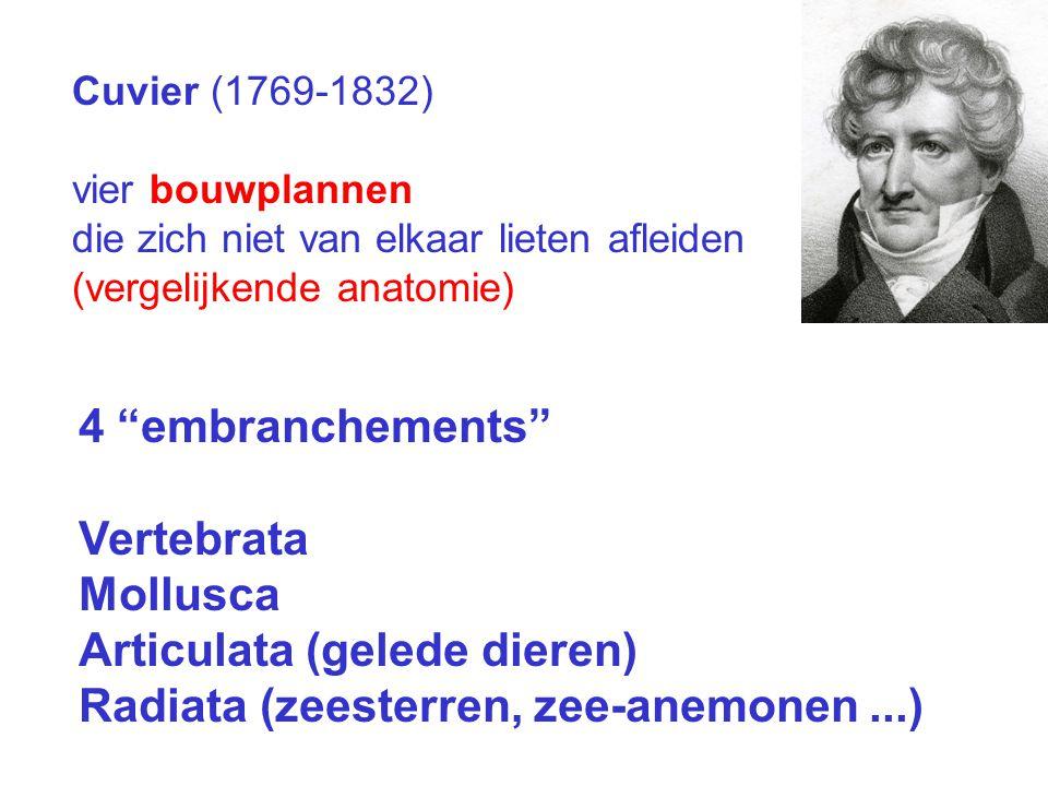 Cuvier (1769-1832) vier bouwplannen die zich niet van elkaar lieten afleiden (vergelijkende anatomie) 4 embranchements Vertebrata Mollusca Articulata (gelede dieren) Radiata (zeesterren, zee-anemonen...)