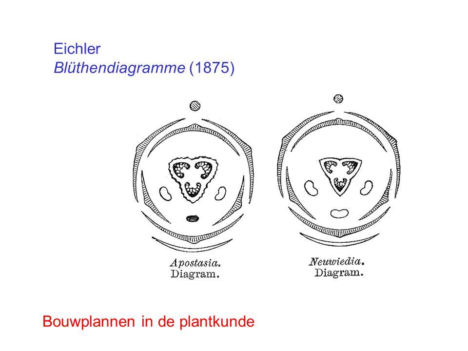 Eichler Blüthendiagramme (1875) Bouwplannen in de plantkunde
