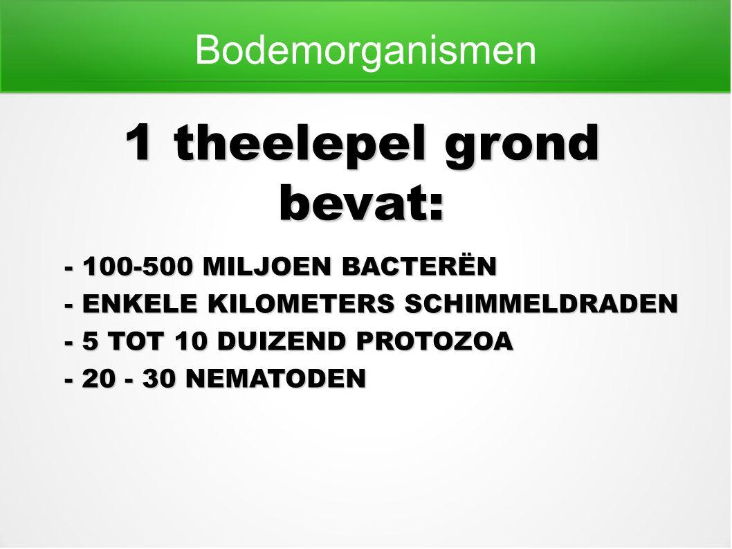Bodemorganismen 1 theelepel grond bevat: - 100-500 MILJOEN BACTERËN - ENKELE KILOMETERS SCHIMMELDRADEN - 5 TOT 10 DUIZEND PROTOZOA - 20 - 30 NEMATODEN