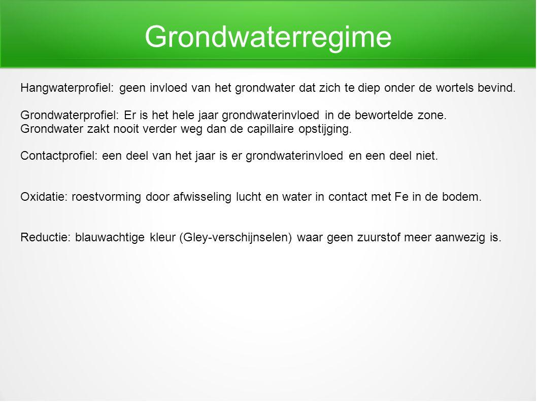 Grondwaterregime Hangwaterprofiel: geen invloed van het grondwater dat zich te diep onder de wortels bevind. Grondwaterprofiel: Er is het hele jaar gr