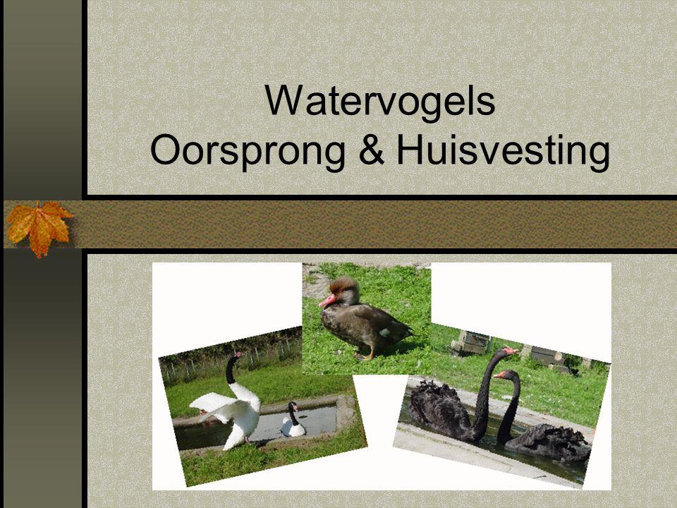 Watervogels Oorsprong & Huisvesting