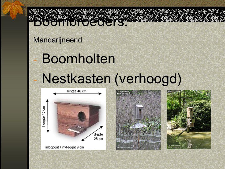 Boombroeders: Mandarijneend - Boomholten - Nestkasten (verhoogd)