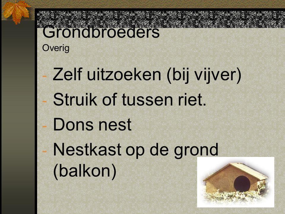 Grondbroeders Overig - Zelf uitzoeken (bij vijver) - Struik of tussen riet. - Dons nest - Nestkast op de grond (balkon)