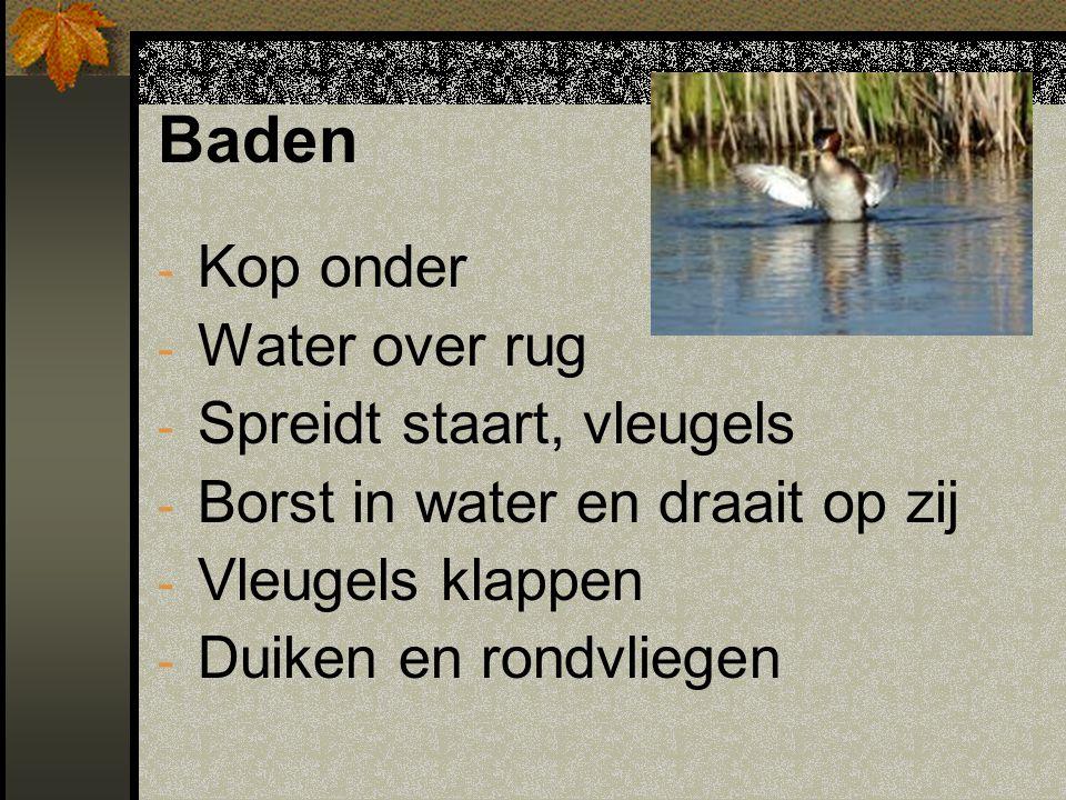 Baden - Kop onder - Water over rug - Spreidt staart, vleugels - Borst in water en draait op zij - Vleugels klappen - Duiken en rondvliegen