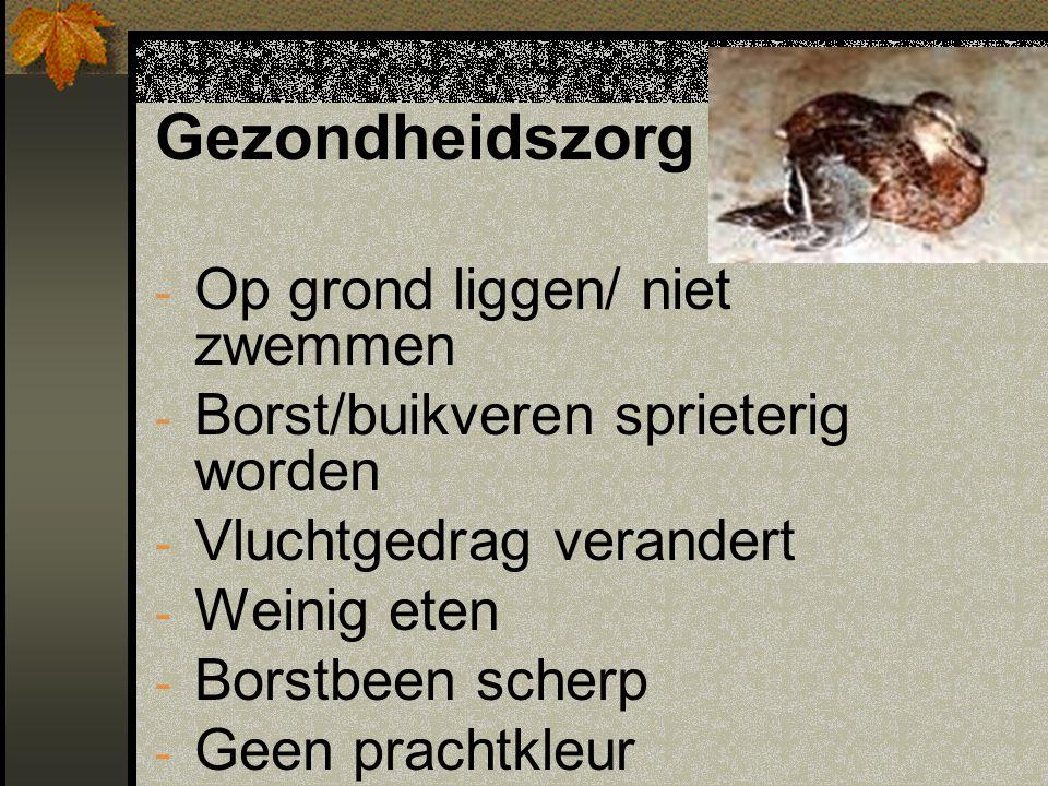 Gezondheidszorg - Op grond liggen/ niet zwemmen - Borst/buikveren sprieterig worden - Vluchtgedrag verandert - Weinig eten - Borstbeen scherp - Geen p