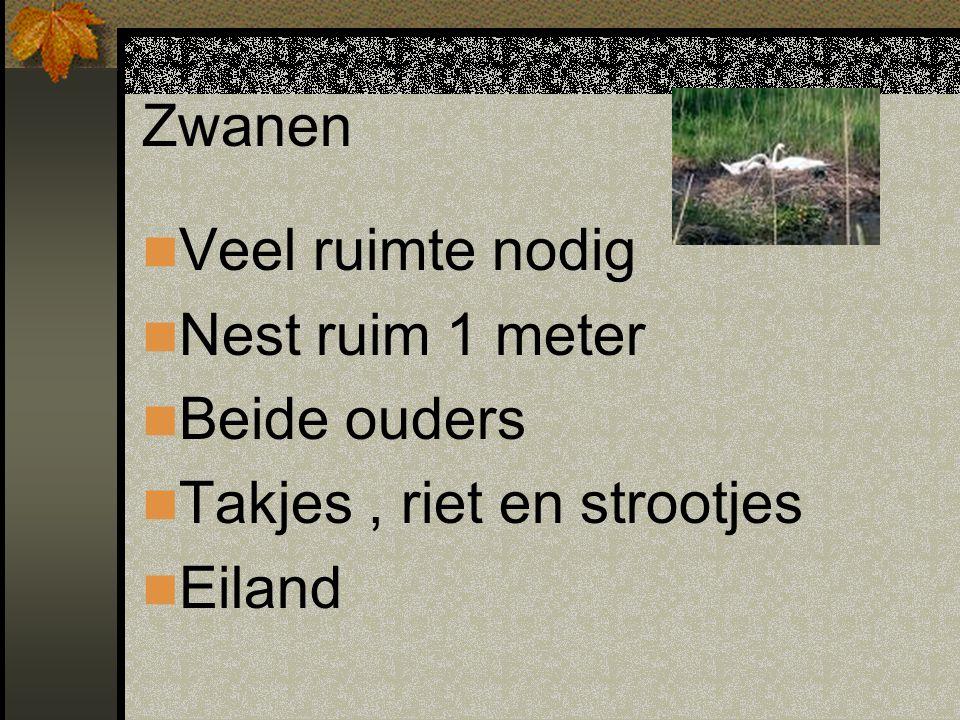 Zwanen Veel ruimte nodig Nest ruim 1 meter Beide ouders Takjes, riet en strootjes Eiland