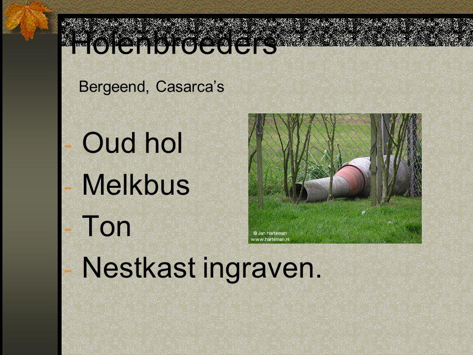 Holenbroeders Bergeend, Casarca's - Oud hol - Melkbus - Ton - Nestkast ingraven.