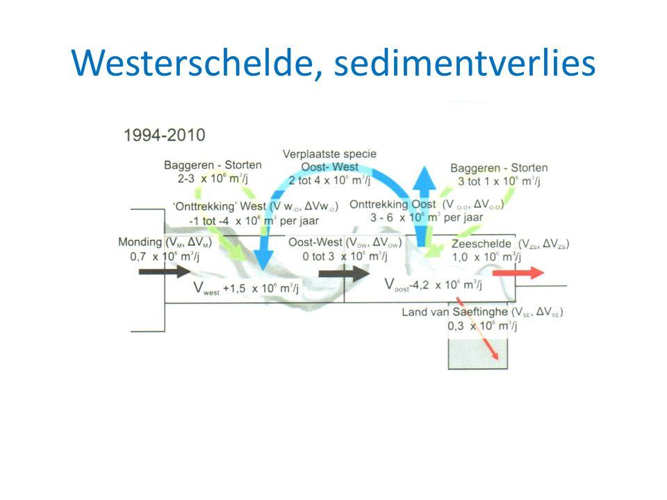 Westerschelde, sedimentverlies