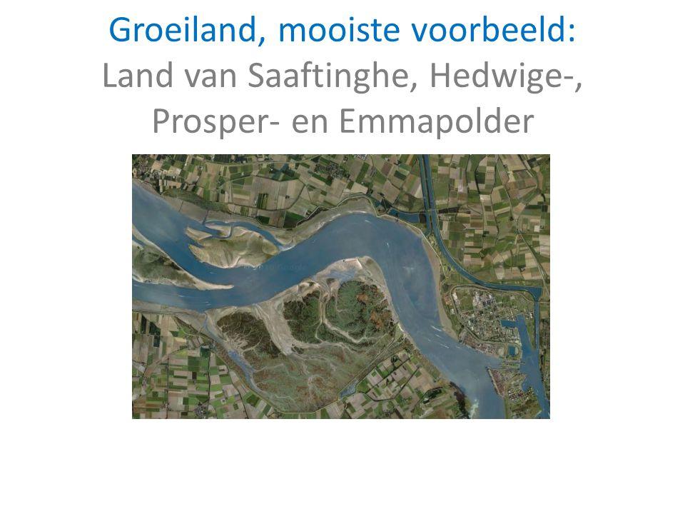 Groeiland, mooiste voorbeeld: Land van Saaftinghe, Hedwige-, Prosper- en Emmapolder
