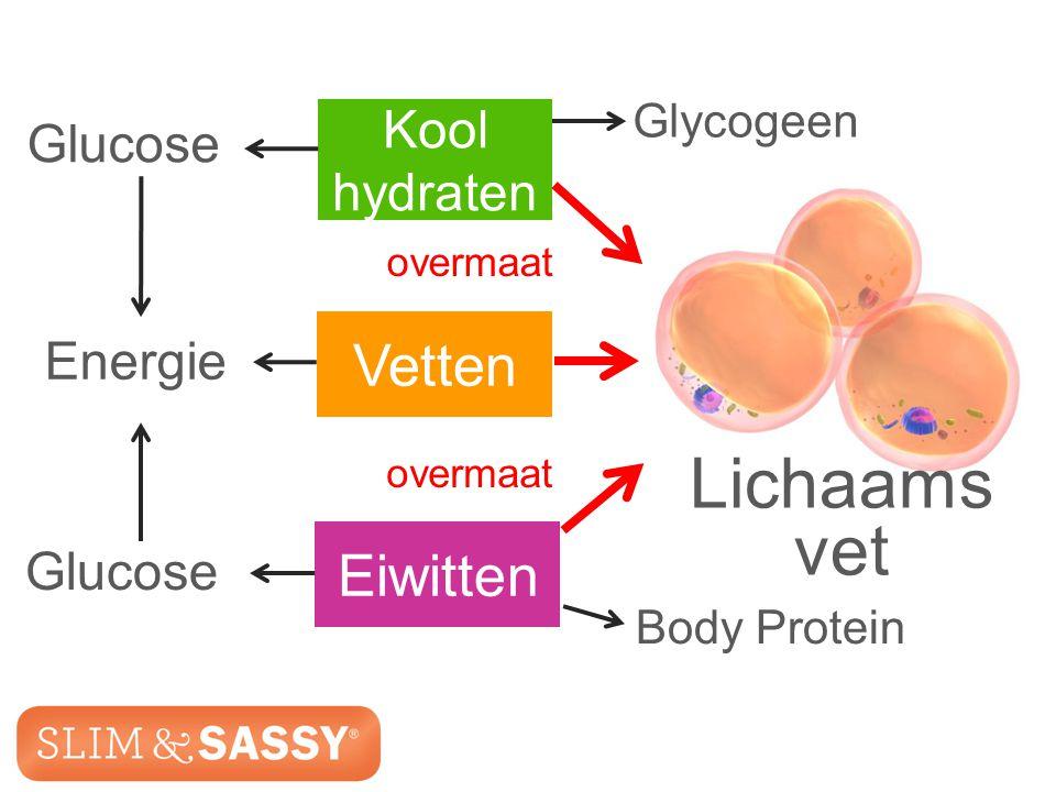 Slim & Sassy ™ Metabolic Blend Glucose Glycogeen Body Protein Lichaams vet Energie Kool hydraten Vetten Eiwitten Glucose overmaat